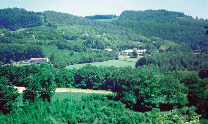 Plants forestiers