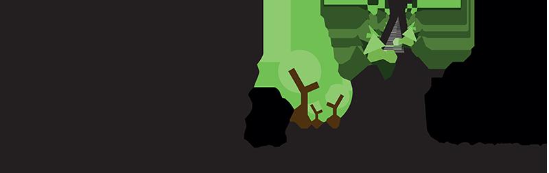 Sapins de Noël en Allier - Plants Forestiers - Plants de Bocage : Pépinière Forestière d'Allier